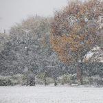 東京都中野区の公園での雪景色(平成28年11月24日)